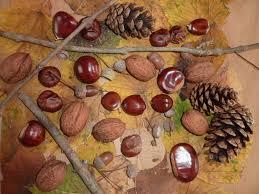Marrons noix